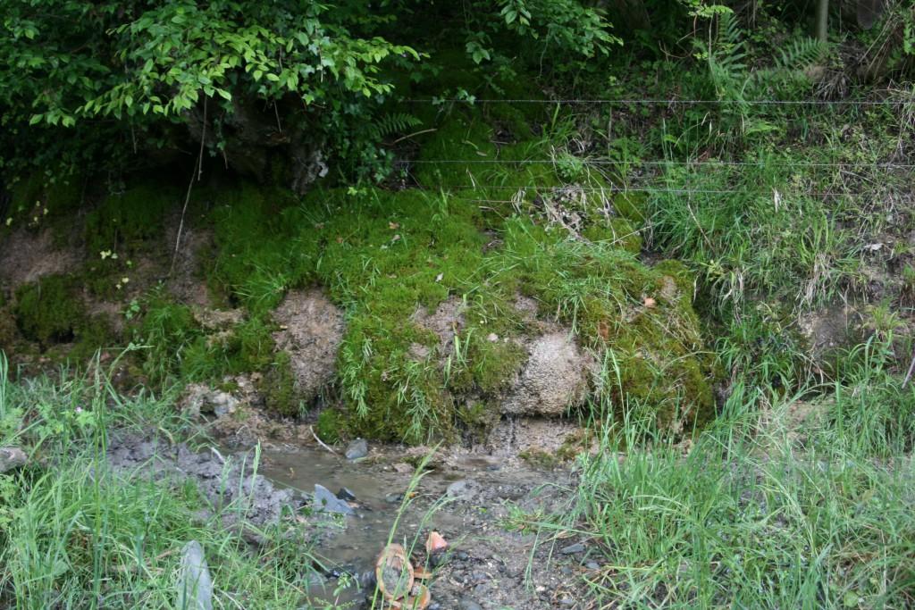 végétation sur dalles 2